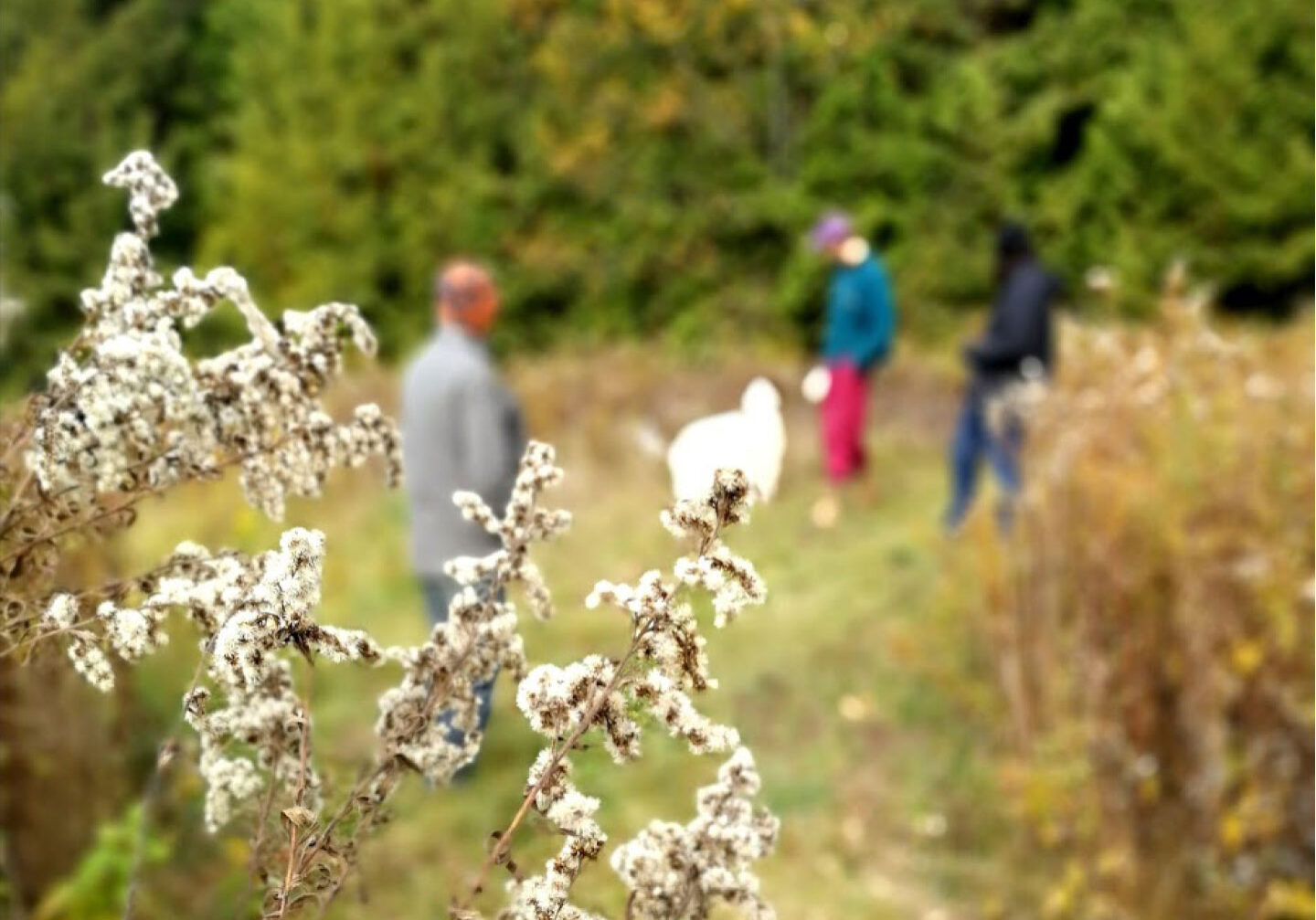 Visitors to Headwaters walk through a field near the forest
